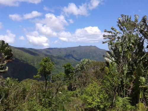 Mauritius Wanderung Nationalpark